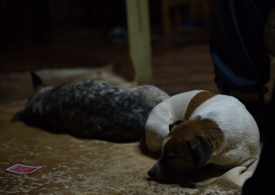 The hounds of happiness lying in front of the fire