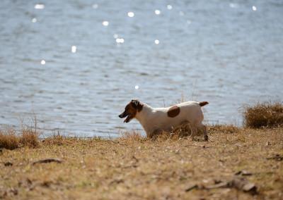 Jocky in the dam