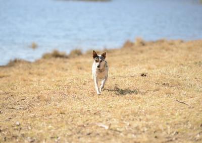 My beautiful Lulu running towards me